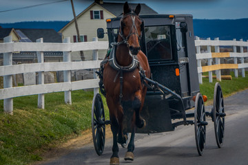 Outdoor view of Amish horse and carriage travels on a road in Lancaster County