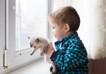 Boy, kitten, home, serious