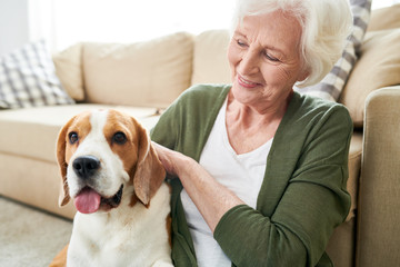 Happy excited senior woman with white hair sitting on floor and stroking favorite Beagle dog while hugging pet at home