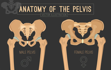 Female Male Pelvis