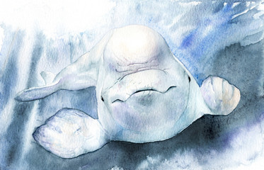 watercolor picture. beluga. Delphinapterus leucas with background