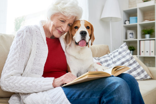 Positive smiling attractive elderly woman in casual clothing sitting on sofa and reading book while embracing cute dog at home