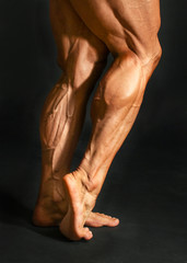 Detail of male bodybuilder back leg calf muscles on black background. Gastrocnemius and soleus.