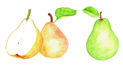 Watercolor illustration pears on white background. Hand drawn painting.