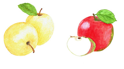 Watercolor set with apples, leaves. Hand drawn painting. Isolated eco natural food fruit illustration on white background.