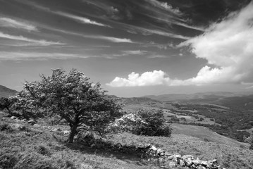 Black and white landscape view from Cadair Idris looking North towards Dolgellau over fields and countryside on sunny day