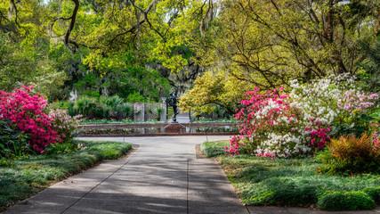 Aluminium Prints Azalea Blooming Spring Azalea at Brookgreen Gardens
