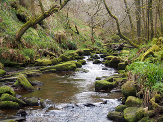 a beautiful hillside stream running though moss covered rocks and boulders with trees in spring trees an early spring forest landscape in the colden valley in west yorkshire england