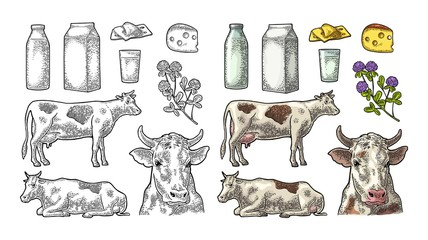 Set Milk farm. Cow, clover, box, cheese, glass and bottle.