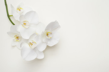 Tuinposter Orchidee romantic branch of white orchid