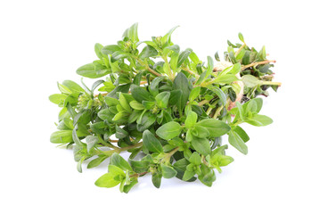 Thyme close up isolated.