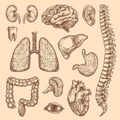 Human organs vector sketch body anatomy icons