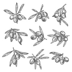 Vector olives bunch sketch icons
