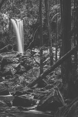 Curtis Falls located in Mount Tamborine during the day.