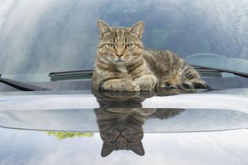 Tabby Cat Reflections