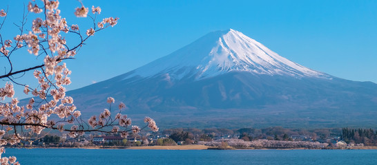 Mount Fuji with snow capped, blue sky and beautiful Cherry Blossom or pink Sakura flower tree in Spring Season at Lake kawaguchiko, Yamanashi, Japan. landmark and popular for tourist attractions