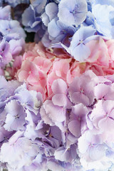 beautiful hydrangea flowers in a vase on a table . Bouquet of light blue, lilac and pink flower. Decoration of home. Wallpaper and background. Vertical photo