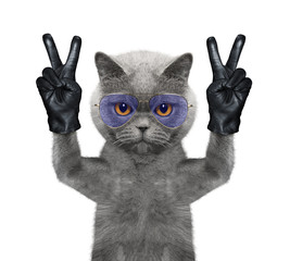 Cat with two victory fingers. Isolated on white