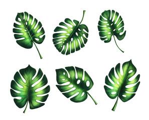 Faux split philodendron leaves