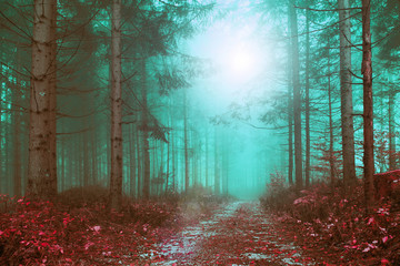 Wall Mural - Fantasy colored foggy forest path with mystic foggy light. Color filter effect used.