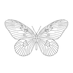 Hand drawn butterfly. Black and white vector illustration for coloring.