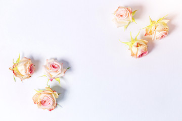 Texture, white background, pink roses on corners with copyspace