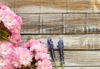 Red cherry blossom with two grape hyacinth on wood