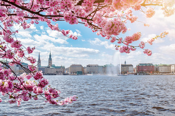 view of Alster Lake in Hamburg framed by blooming cherry tree on beautiful sunny spring day