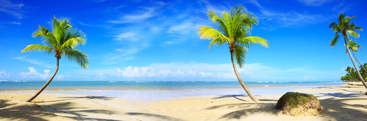 Caribbean beach with palm trees and blue sky.