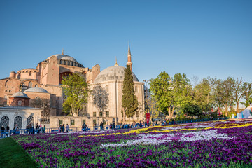 Largest Carpet of Tulips of the World in Sultanahmet for tulip festival
