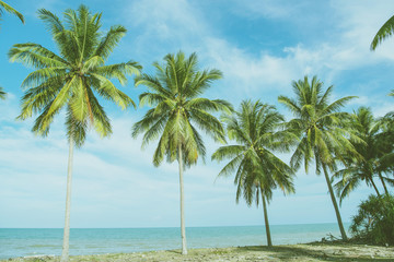 nature green palm leaf on tropical beach with sun light. Summer vacation and travel concept. Copy space