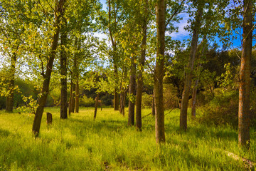 Forest trees at a bright sunny day with shadows and green grass field