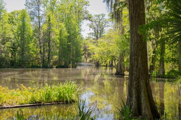 Magnolia Swamp 5