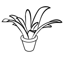 Vector illustration, isolated plant in pot in black and white colors