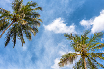 Coconut palms on the blue sky background. Tropical travel concept.