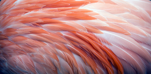 Foto op Plexiglas Flamingo Close up view of pink flamingo feathers