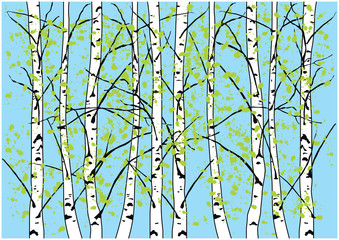 Color vector illustration of spring birch trees and blue sky. Vestor birch forest with fresh green leaves and blue sky.