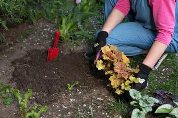 Gardening - Planting Flowers  In Sunny Garden