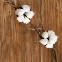 Natural wooden background with cotton flowers on branch. Environmental fon with natural  plant. Selective focus and Copy space