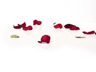 Close-up red rose petals on white background