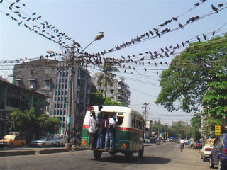 A bus passes under a cable lined with pigeons in Yangon