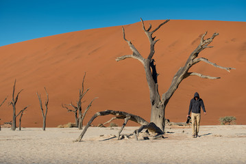Young male photographer and traveler standing with dead tree in deadvlei (Sossusvlei), famous natural landmark in Namib desert of Namibia, Africa