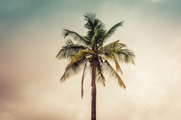 Stand alone coconut tree