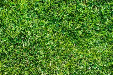 Green grass lawn under the summer sunshine