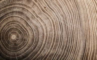 Stump of tree felled - section of the trunk with annual rings. Slice wood. Wall mural