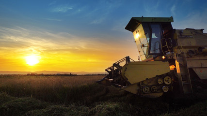 Combine harvester gathers the wheat crop at sunset