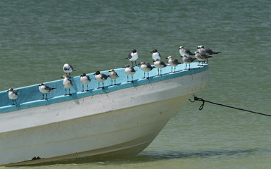 Seagulls on a fishing boat on the beach at Holbox Island, Mexico
