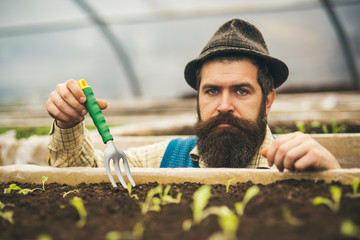 Closeup serious gardener in fedora hat planting seeds. Bearded man with blue eyes holding gardening fork in greenhouse
