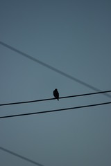bird in the cables