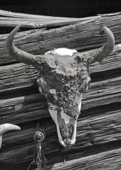 Buffalo Skull and Horns